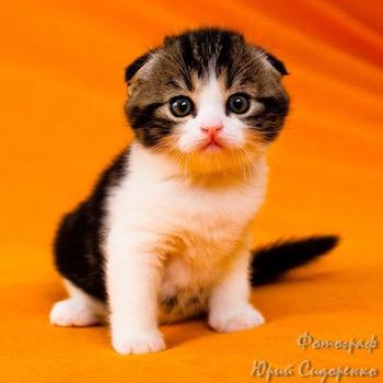 cat2-a
